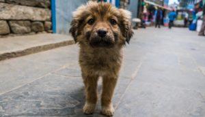 Mit CSR und Geocaching Straßenhunden helfen